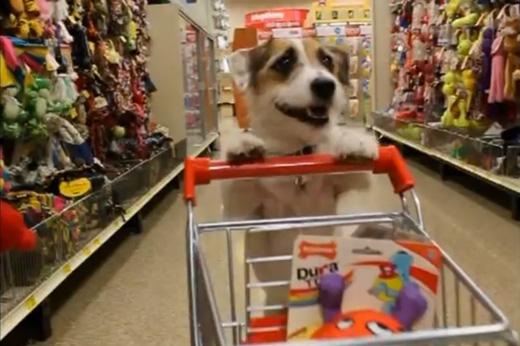 Jesse - Den hjälpsamma hunden